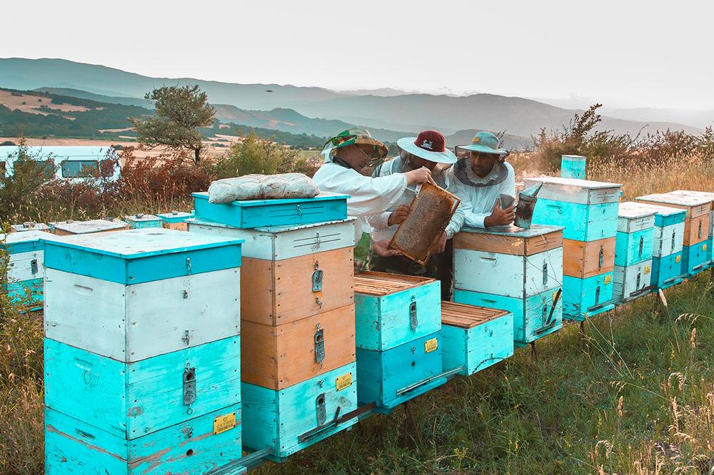 La société Toulousaine Capturs lance un traceur GPS à destination des apiculteurs professionnels mais également de simples amateurs. Avec le développement de l'apiculture, le fléau du vol de ruches a explosé en quelques années. On ne compte plus le nombre